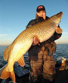 Monster Pike - Holland
