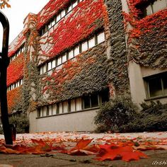 Autumn reds! #Instagram #YorkU #Fall #School #Photography York University, School Photography, Autumn, Fall, Colour, Building, Instagram Posts, Red, Pictures