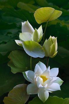 ...Zen > WabiSabi < Zen...