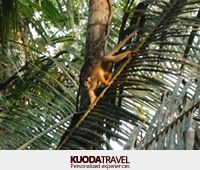 the Peruvian jungle can find a variety of monkeys, who will accompany you during your journey through the Amazon.