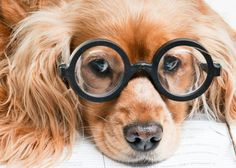 Unusual Pet Names Inspired by Celebs, Historical Figures and More  I am totally naming my next pet Harry Pawter! harry potter