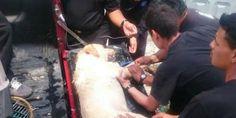 Muore per stanchezza dopo aver salvato 7 persone dalle macerie