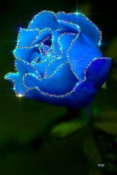 Роза,цветы.