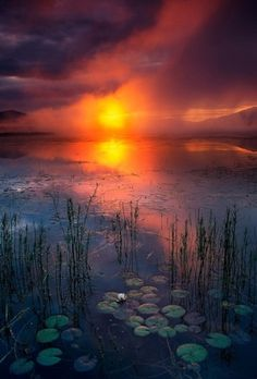 sundown~water lilies by Kay Berry