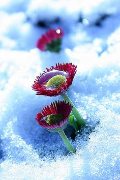 Image shared by Cara Sposa. Find images and videos about photography, blue and nature on We Heart It - the app to get lost in what you love. Foto Macro, Winter Beauty, Winter Wonder, Jolie Photo, Winter Garden, Macro Photography, Amazing Nature, Beautiful World, Mother Nature