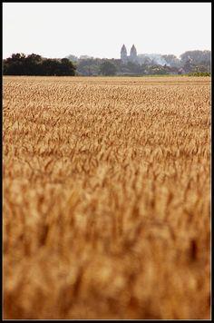 Printable digital photo photography wheatfield nature