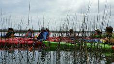 Kayak Trip Colleton River