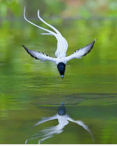 Nature Animals, Animals And Pets, Cute Animals, World Birds, Animals Of The World, Rare Birds, Exotic Birds, Beautiful Birds, Animals Beautiful