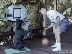 This Dog Plays Basketball Better Than Me