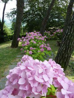 Ortensie in rosa  http://jardinmonamour.blogspot.it/