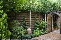 Terracotta urn in a border with box spirals ~ acer & camellia beneath pleached hornbeams ~