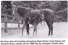 No Class. The strangely named No Class was the foundation mare for Sam-Son Farms in Canada. By Nodouble - Classy Quillo by Outing Class, No Class was stakes placed as a runner. She would produce 8 foals of which 6 became stakes winners, 4 champions. She is the dam of Sky Classic, Regal Classic, Grey Classic, Classy 'n Smart, and is the grand dam of Dance Smartly, Smart Strike and Dancethruthedawn. Click on the visit button to read the full story of No Class.