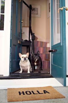 *Dogs love to Answer the Door Bell, & will be the first at the Door,  to get It !  These two are Polite, & not overly excited, & may know the Individual, I suppose, or the added plus in benefit of *Obedience School, may help to keep the Dog* Cool!