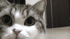 funny gifs   funny cat gif 2funny gifs,gif   funny gifs,gif