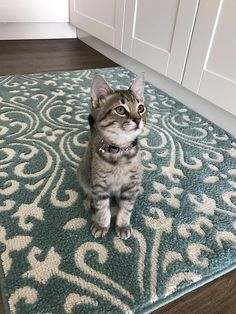 Hello my name is Amélie and I am adorable. Except when I try to trip my humom down the stairs. by HRpanther cats kitten catsonweb cute adorable funny sleepy animals nature kitty cutie ca