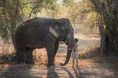Love elephant by Sarawut Intarob on 500px