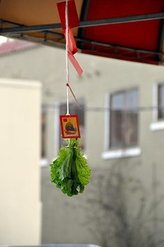 Anh Hong's Lion Noms   Flickr - Photo Sharing!