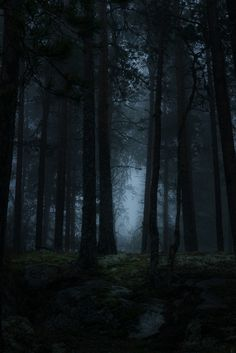 ἀταραξία Misty Forest Hyyppäänvuori, Finland by Lauri Lehto Dark Landscape, Fantasy Landscape, Misty Forest, Dark Forest, Magical Forest, Mystique, Dark Photography, Dark Places, Nature Wallpaper