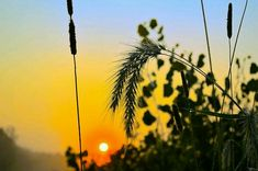 Through The #Grass Art Print by Bonfire #Photography