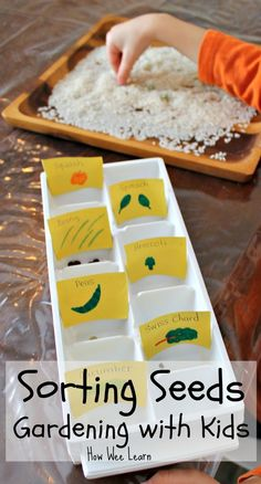 A great sensory activity for spring. This seed activity for kids has them comparing and sorting seeds before the gardening with kids begins!