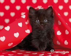 24 Best Valentine S Day Pets Images On Pinterest Cats Gatos And
