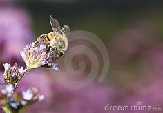 Macro of bee on small flower looking for nectar