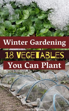 Are you worried about Winter gardening? Check out this article for better results in winter gardening #winter #gardening #vegetables #plant #grow #wintergardening Gardening Vegetables, Vegetable Garden, Winter Garden, Growing Plants, Home And Garden, Canning, Check, Veggie Gardens, Sunrooms