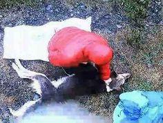 """Casal tortura e mata um cão - Chile - """"O Grito do Bicho"""""""