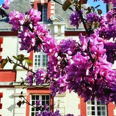 So special #blossom #judastree #spring #chateaudeslys #bedandbreakfast #chambresdhotes #groupaccomodation #holidaydestination #weddingvenue… Bed And Breakfast, Judas Tree, Holiday Destinations, Spring, Wedding Venues, Floral Wreath, Wreaths, Instagram, Plants