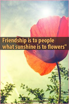 Friendship is to people what sunshine is to flowers.   ZenLama.Com