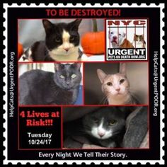 ***TO BE DESTROYED Cats 10/24/17***