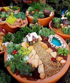 Indoor Fairy Gardens, Fairy Garden Plants, Fairy Garden Houses, Miniature Fairy Gardens, Succulents Garden, Fairies Garden, Succulent Terrarium, Gnome Garden, Fairy Gardening