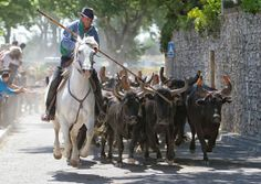Taureaux en Camargue #tourismepaca #camargue  #taureaux #bulls Interesting Photos, Cool Photos, Le Gard, Languedoc, Horse Fly, August 19, Provence France, Heaven On Earth, Planet Earth