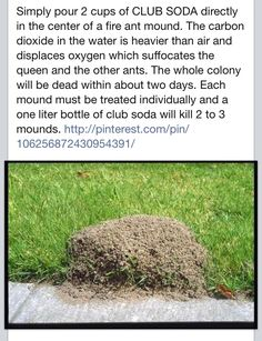Fire ant problems.  I wil try and hope it works.