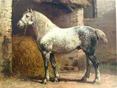 Percheron Horses | RARE Lithograph Percheron Horse Otto Eerelman 1898 | eBay