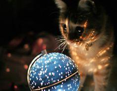 A Magical Cat