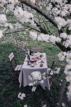 Colazione di primavera sotto un susino
