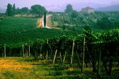 There is a deeper Italy with more to discover - Morning view from the Tuscan Vineyard #photography #italy #workshop #vineyard #winery #tuscany - Photo © Robin Davis