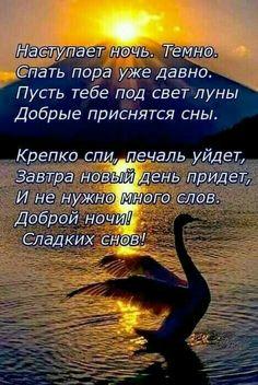Good Night Gif, Good Night Sweet Dreams, Verse, Good Advice, Good Mood, Good Morning, Affirmations, Knowledge, Humor