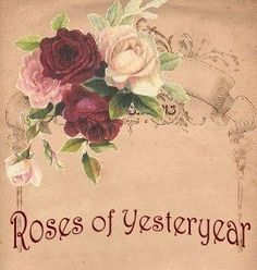 Roses of Yesteryear ~ Vintage Shabby Pink!