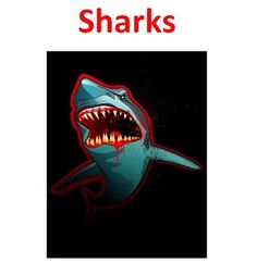 Informational Text on different types of sharks.