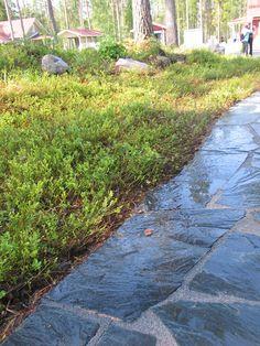 Kasvusto oli tuotu tontille kuukausi sitten isoissa, n. 10 neliön rullissa. Siirrännäistä pitää kastella ekana kesänä huolellisesti, jotta se juurtuu.