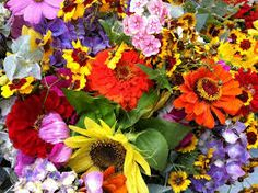 english flowers june - Google Search