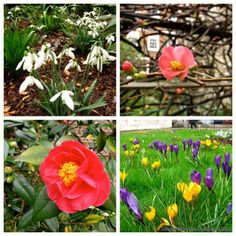 So excited for spring flowers on Day 22's London walk!!