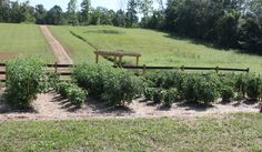 """6 Tips To Eliminate Weeds From Your Garden! 