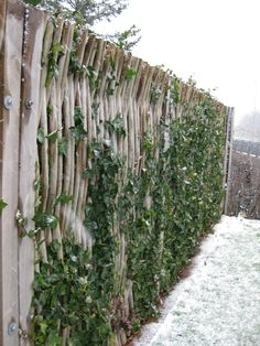 Winter debarked willow fences #TheGreenBarrier #fence #willow #winter