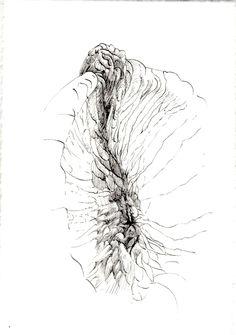 243 Seed Bank, Dandelion, Seeds, Drawings, Flowers, Plants, Dandelions, Sketches, Plant