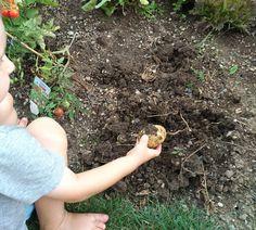 Gärtnern mit kleinen Kindern - Tipps und Tricks ⋆ Miss Broccoli Wood Watch, Broccoli, Planting For Kids, Sprouting Seeds, Harvest, Tips And Tricks, Wooden Clock