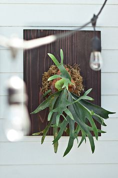 Staghorn Fern | 17 Incredible Houseplants You Need Right Now