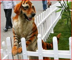 Diy dog costumes pinterest harry potter halloween diy harry dogs dyed to look like other animals diy dog costumescostume solutioingenieria Images